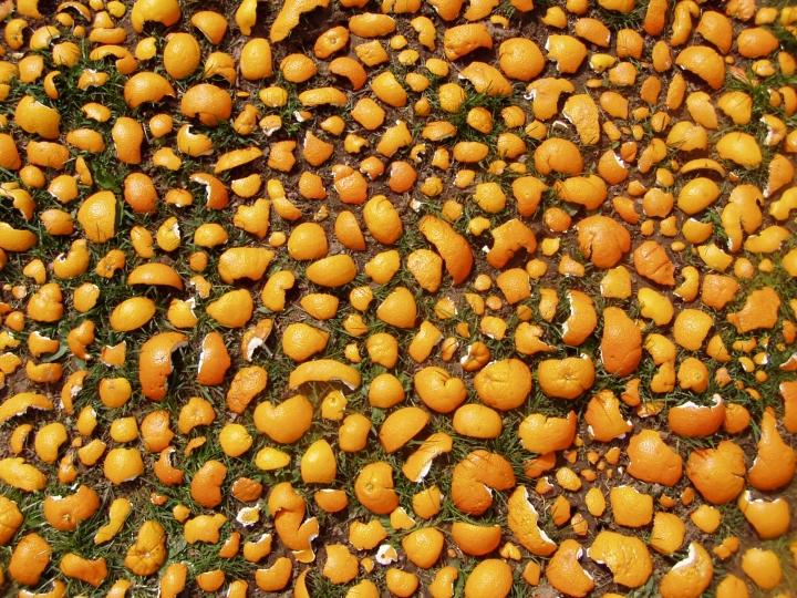 oranges-detail1