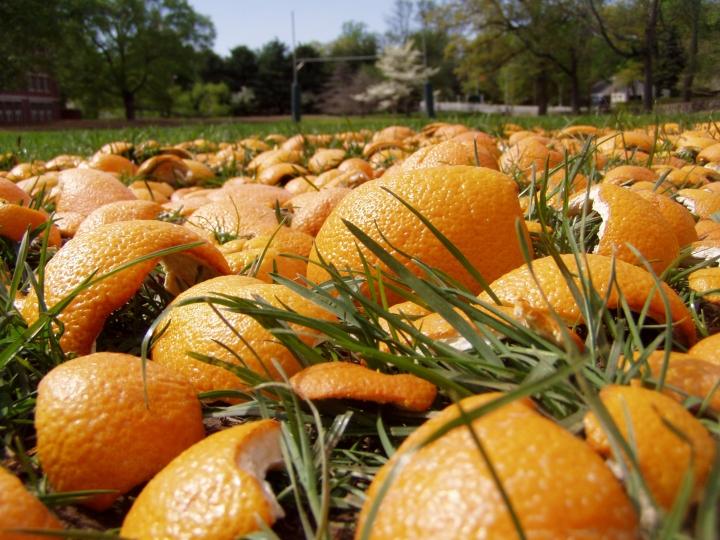oranges-detail2