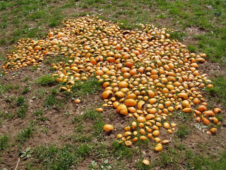 oranges-overall